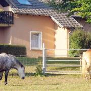 Pferdekoppel am Haus des Feinen Ausblicks
