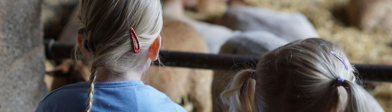 Mädchen beobachten die Schafe