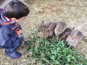 Ein Junge beobachtet die Kaninchen beim Fressen