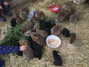 Kaninchen zum Anfassen im Gehege