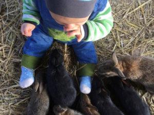 Kleinkind beim Erstkontakt mit Kaninchen