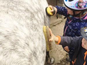 Kinder beim strigeln eines Ponys