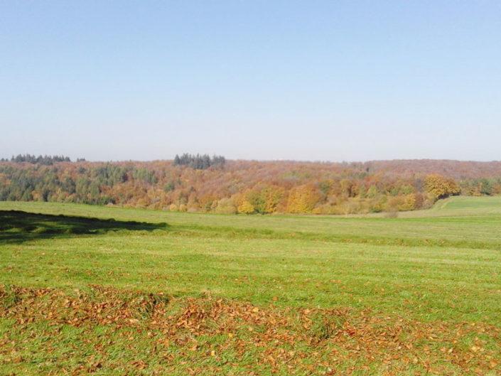 Wiesen und Wälder in der Umgebung von Fleringen