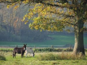 zwei Esel auf der Wiese unter einem Baum