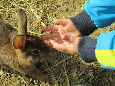 Kind möchte Kaninchen auf die Hand nehmen