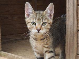 Katze in Fleringen auf dem Ferienhof Feinen