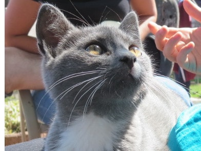 Katze auf dem Schoss von Feriengästen