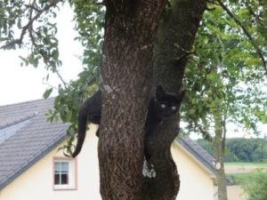 Katze im Baum versteckt