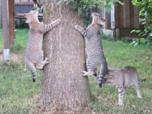 Spielende Katzen am Baum