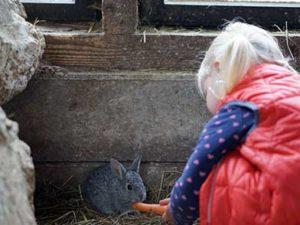 Kind füttert Kaninchen mit saftiger Möhre