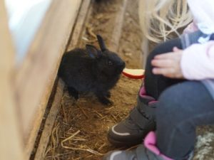 Kind füttert Kaninchen mit Apfelstück