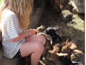 Kind füttert Kaninchen mit Karotte