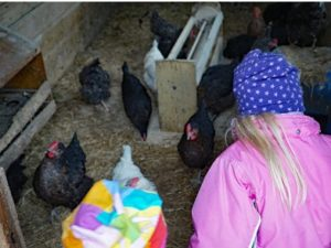 Kinder im Hühnerstall beim Eier suchen
