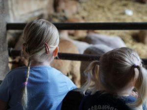 Zwei Mädchen beobachten die Schafe