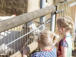 Zwei Mädchen beobachten am Zaun die Ziegen und füttern sie.