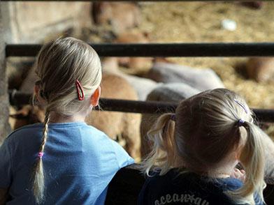 Mädchen bei den Schafen