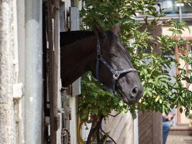 Pferd im Unterstand