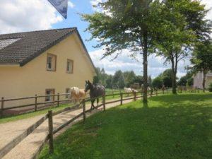 Pferde bei einer Ferienwohnung vom Ferienhof Feinen