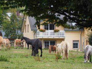 Pferde beim grasen vor einem Ferienhaus vom Ferienhof Feinen