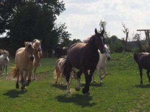Pferde beim Laufen über die Koppel