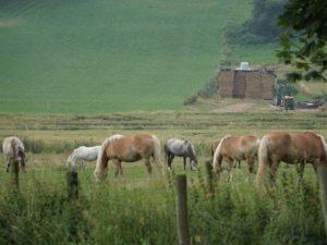 Pferde auf der Wiese in Fleringen