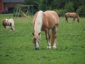 Pferde beim weiden