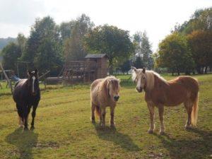 Pferde und Ponys auf der Koppel