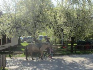 Auf dem Weg zum Reitplatz im Frühling