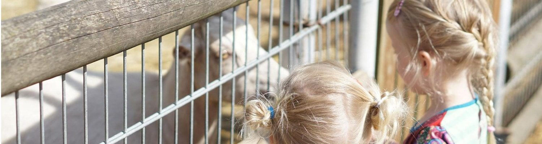 Mädchen zu Besuch bei den Ziegen