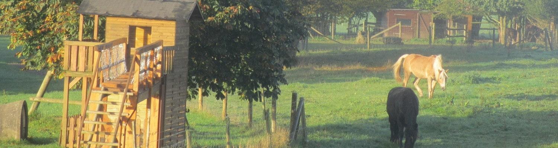 Pferde und Spielplatz vom Ferienhof Feinen