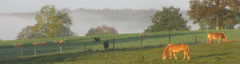 Pferde und Schafe beim Grasen auf der Weide