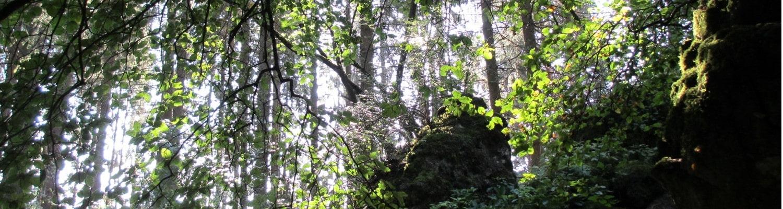 Der Zauberwald der Eifel bei der Krausbuche