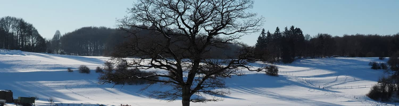 Umgebung des Ferienhofes im Winter